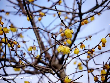 慈しみを・・・☆早春の黄色い花・・・♪_c0098807_200423.jpg