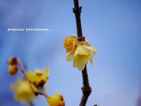 慈しみを・・・☆早春の黄色い花・・・♪_c0098807_2051336.jpg