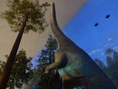 福井恐竜博物館_f0170422_9544723.jpg