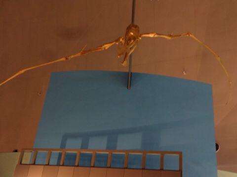 福井恐竜博物館_f0170422_9544927.jpg