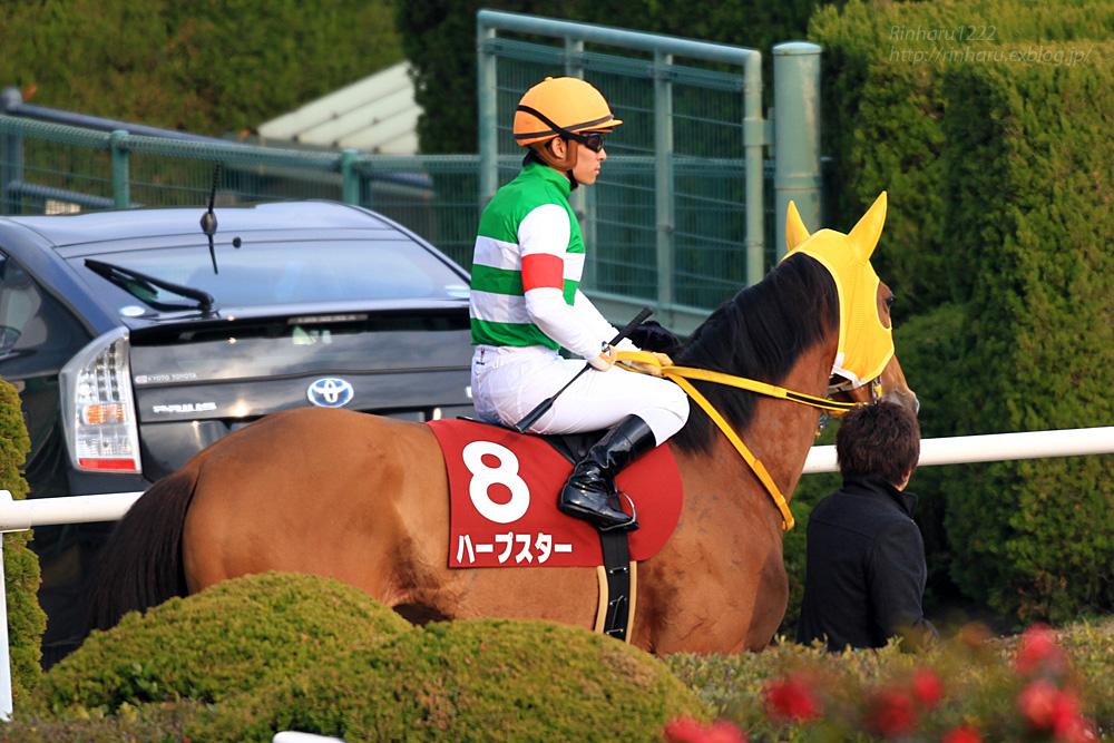 2015.2.15 京都競馬場☆ハープスター【Harp Star】_f0250322_203218.jpg