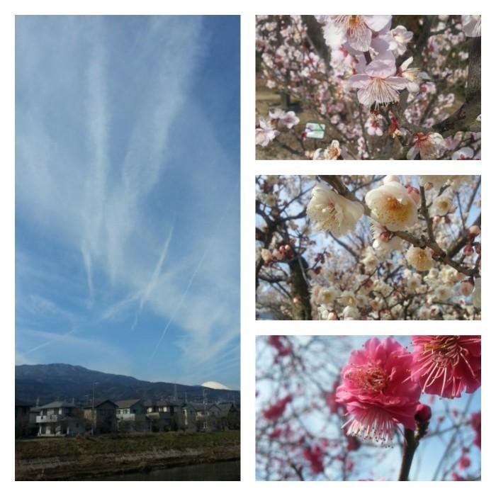 フラワーガーデン梅祭り_d0157745_16232421.jpg