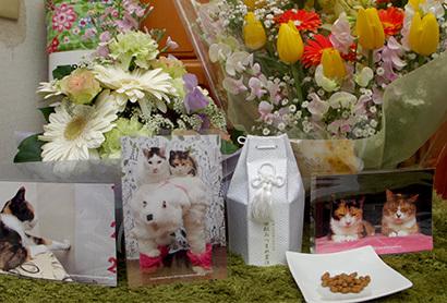 みっちゃん火葬終わりました。_a0028451_19020242.jpg