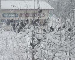 大雪からの回復_d0050155_958485.jpg