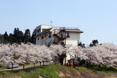 2月の桜_d0182179_1738534.jpg