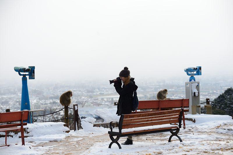 2015京の雪景色@嵐山モンキーパーク岩田山 「雪猿」・其の二_f0032011_19512558.jpg