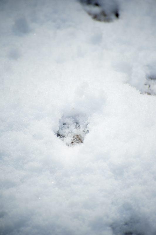 2015京の雪景色@嵐山モンキーパーク岩田山 「雪猿」・其の二_f0032011_20192132.jpg