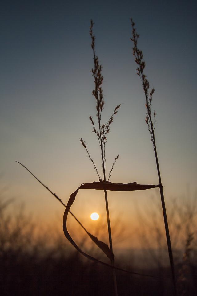 多峰主山の夜明け_b0010915_20121110.jpg