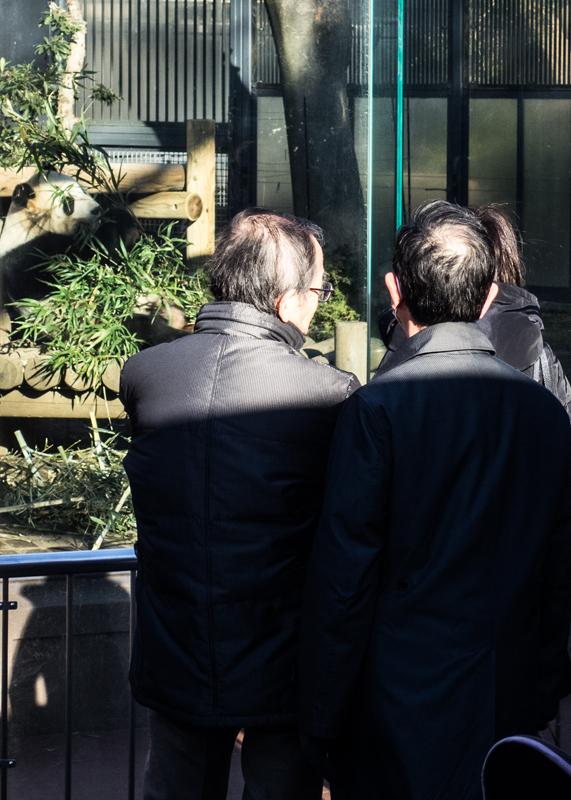 30年来の生パンダ/上野動物園_d0214541_13115173.jpg