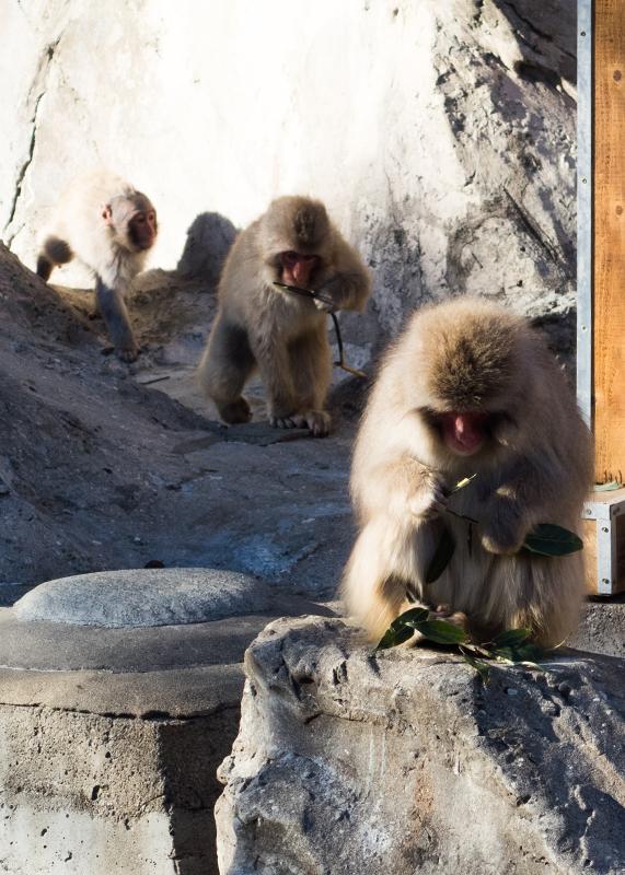 サルの整列/上野動物園_d0214541_13553671.jpg