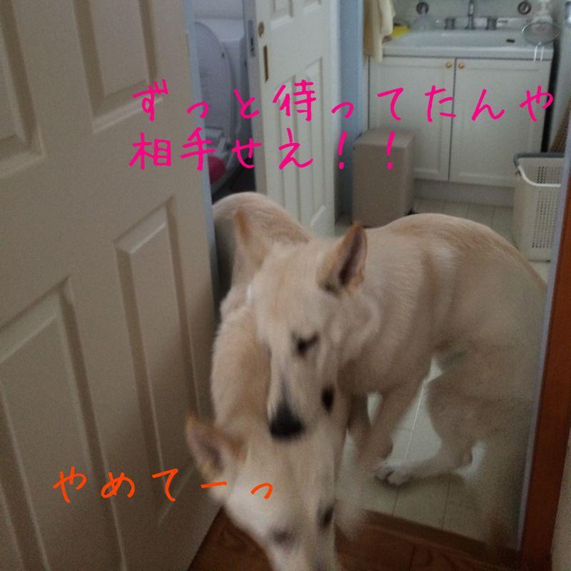 e0310553_20104040.jpg
