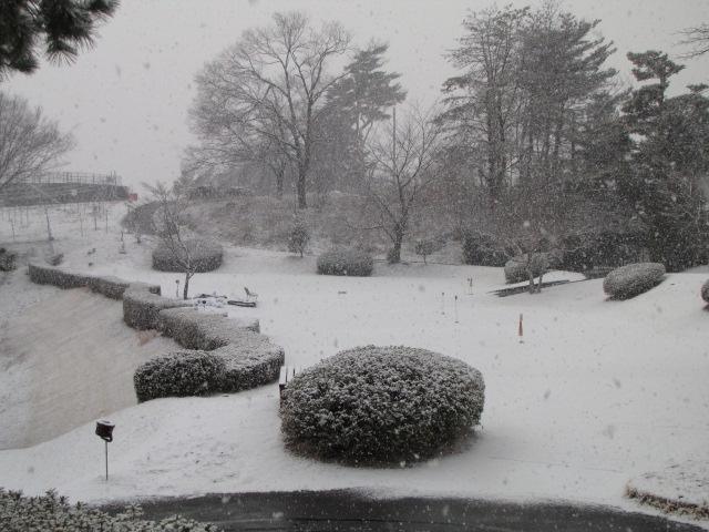 本日(2/17)は降雪によりクローズです_f0096067_828965.jpg