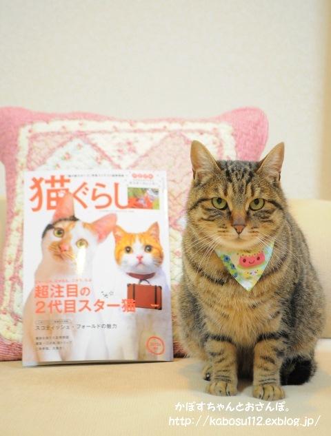 猫ぐらし_a0126590_23030172.jpg