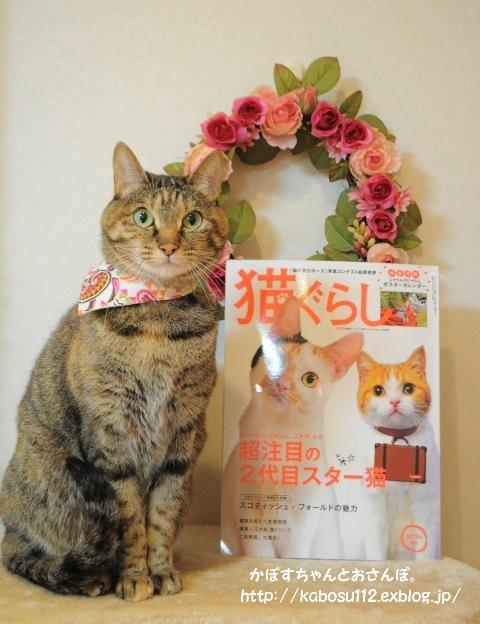 猫ぐらし_a0126590_23031564.jpg