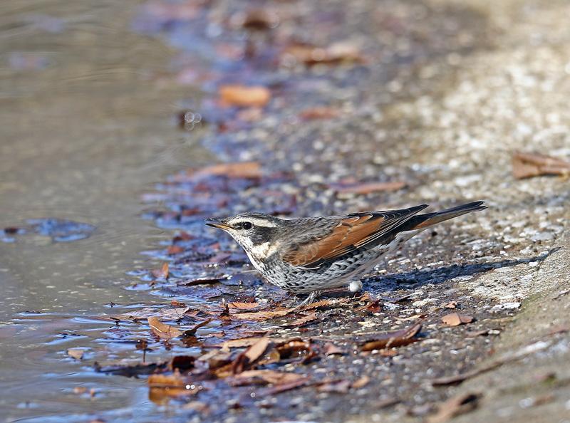 水辺で遊ぶ野鳥たち①♪_d0195897_1342121.jpg