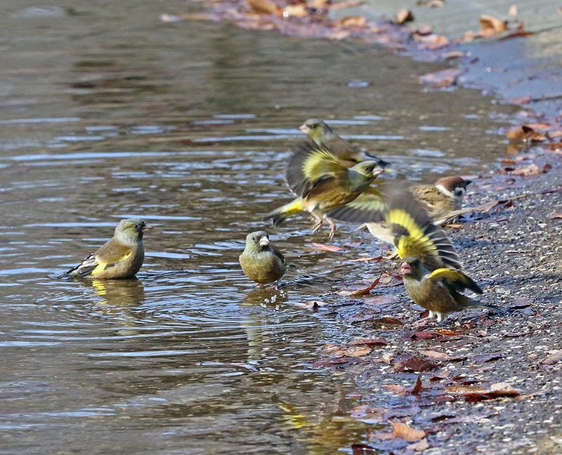 水辺で遊ぶ野鳥たち①♪_d0195897_13443366.jpg