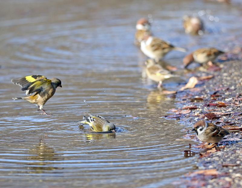 水辺で遊ぶ野鳥たち①♪_d0195897_13451572.jpg