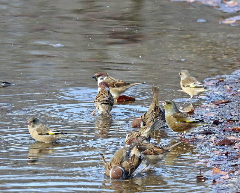 水辺で遊ぶ野鳥たち①♪_d0195897_13465019.jpg
