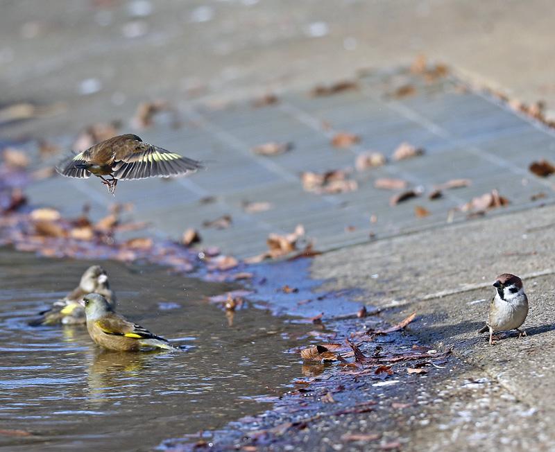 水辺で遊ぶ野鳥たち①♪_d0195897_1346563.jpg