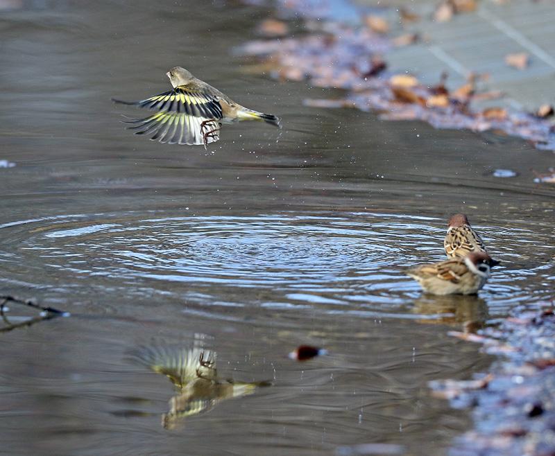 水辺で遊ぶ野鳥たち①♪_d0195897_13474960.jpg