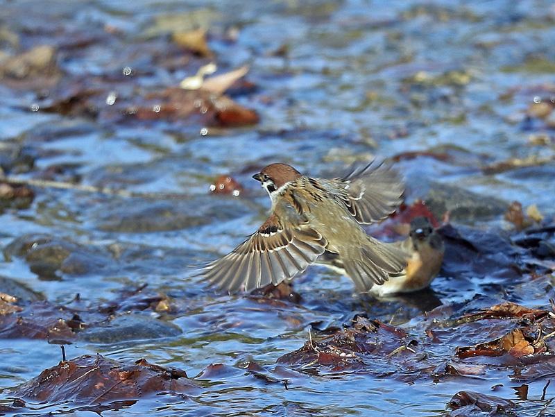 水辺で遊ぶ野鳥たち①♪_d0195897_13485981.jpg