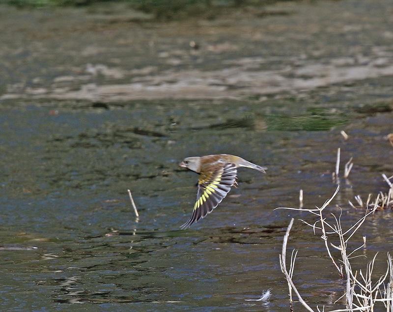 水辺で遊ぶ野鳥たち①♪_d0195897_134883.jpg