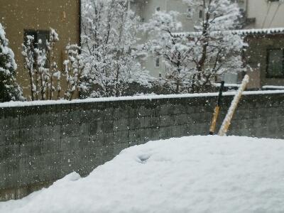 雪の中でもパンジーは_f0255704_18104395.jpg