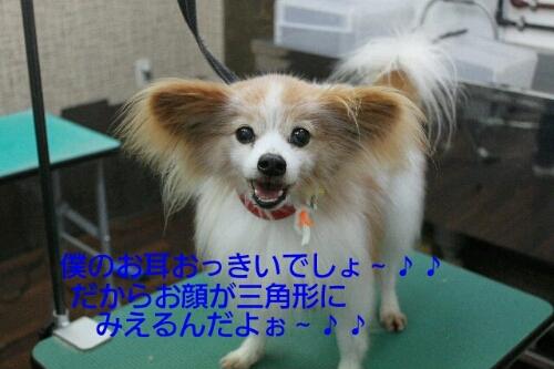 b0130018_1437450.jpg
