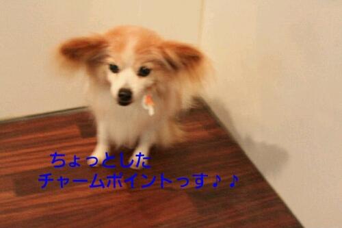 b0130018_14375338.jpg