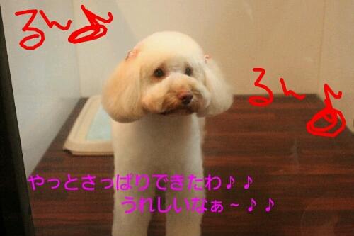 b0130018_14435984.jpg