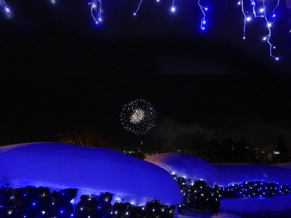 降る雪と咲く花の間_d0179447_2040650.jpg
