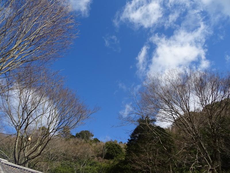 カロリナクラブ例会  in  孝子の森     by     (TATE-misaki)_c0108460_20353974.jpg