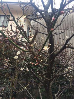 2015.02.18 三寒四温_a0145471_11495014.jpg