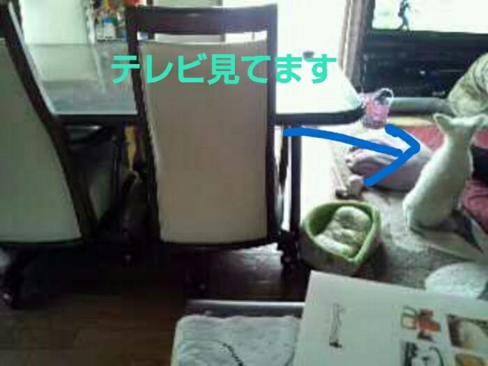 c0348784_19224371.jpg