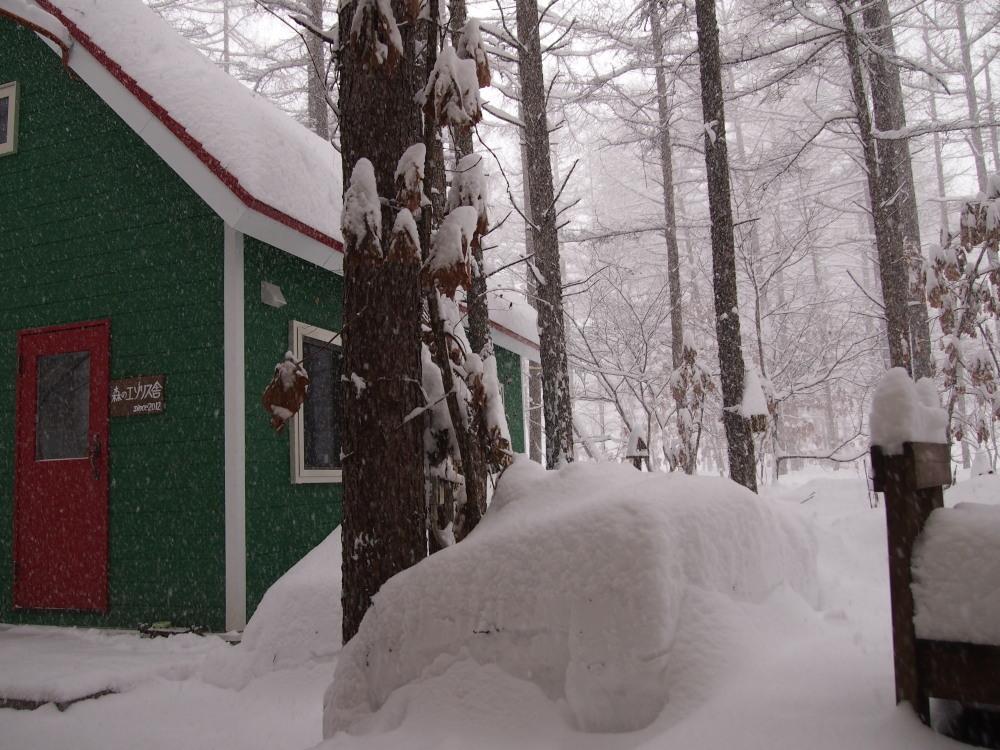 昨夜から昼間にかけての中札内村・・ひさびさの大雪になりました。_f0276498_13082983.jpg