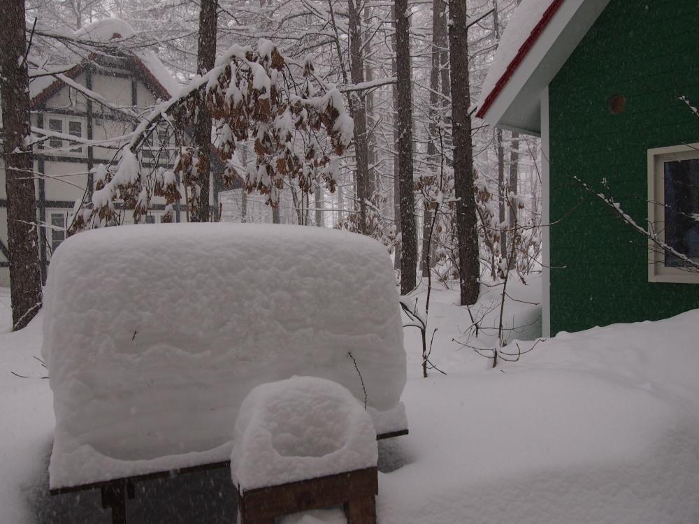 昨夜から昼間にかけての中札内村・・ひさびさの大雪になりました。_f0276498_13084200.jpg