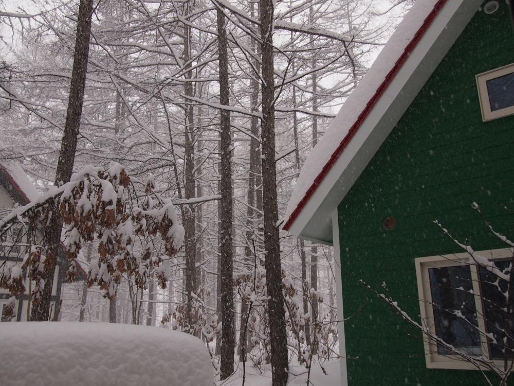 昨夜から昼間にかけての中札内村・・ひさびさの大雪になりました。_f0276498_13091009.jpg