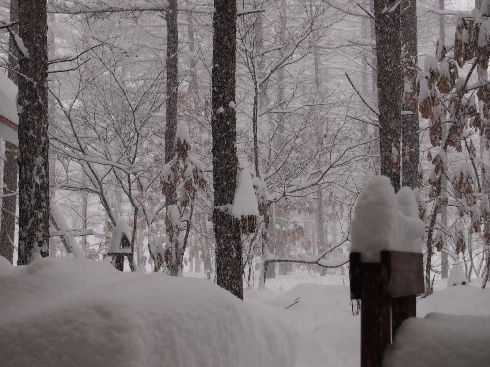 昨夜から昼間にかけての中札内村・・ひさびさの大雪になりました。_f0276498_13092161.jpg