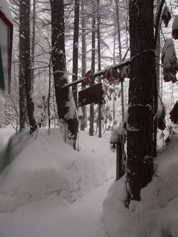 昨夜から昼間にかけての中札内村・・ひさびさの大雪になりました。_f0276498_13100435.jpg