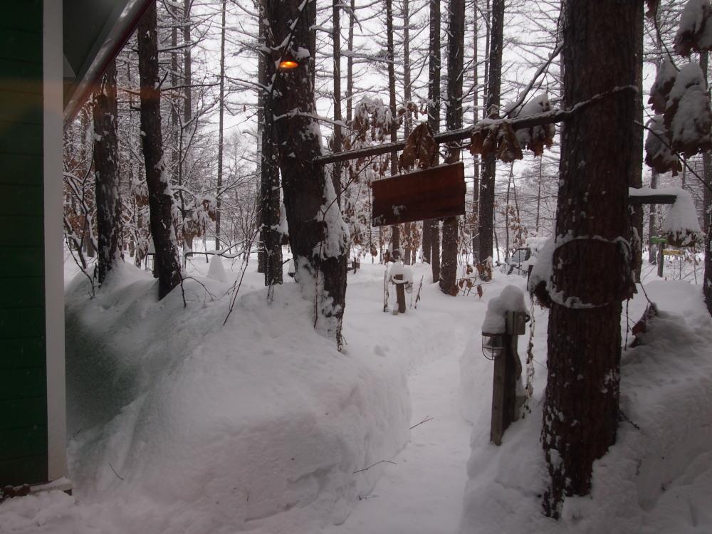 昨夜から昼間にかけての中札内村・・ひさびさの大雪になりました。_f0276498_13104865.jpg