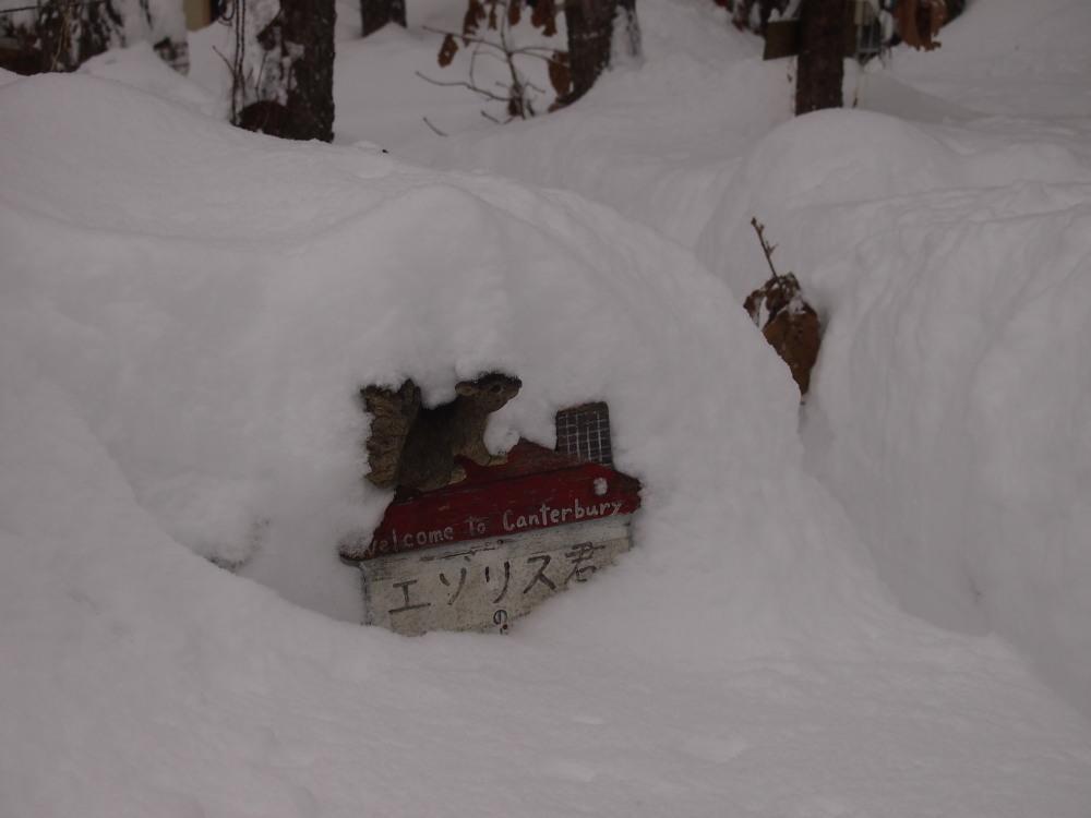 昨夜から昼間にかけての中札内村・・ひさびさの大雪になりました。_f0276498_13112145.jpg