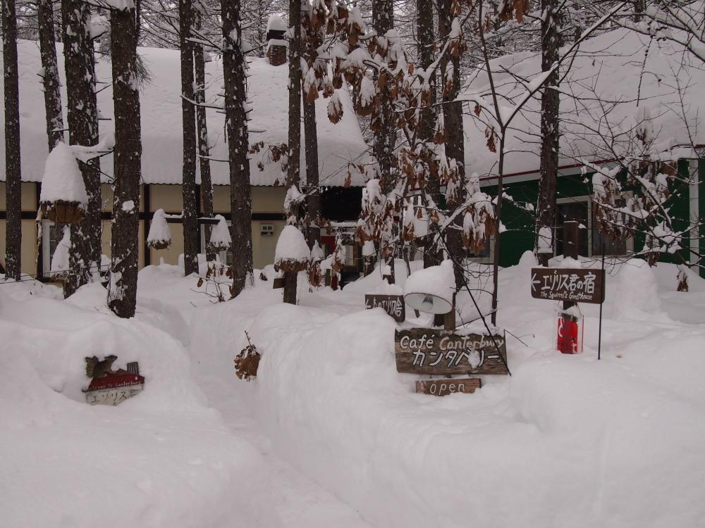昨夜から昼間にかけての中札内村・・ひさびさの大雪になりました。_f0276498_13114517.jpg