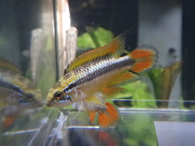 150220 熱帯魚・水草・観葉植物_f0189122_1258169.jpg