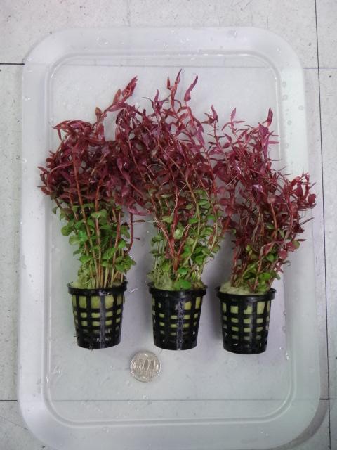 150220 熱帯魚・水草・観葉植物_f0189122_1375477.jpg