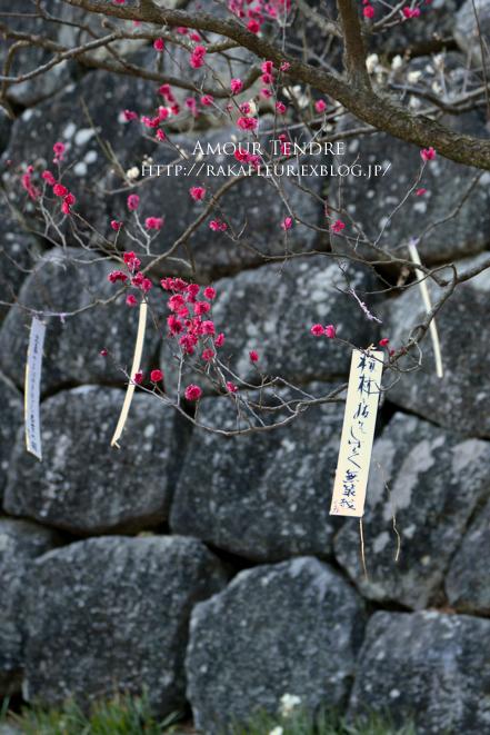 小田原城の梅、いざ!_c0250634_165533.jpg