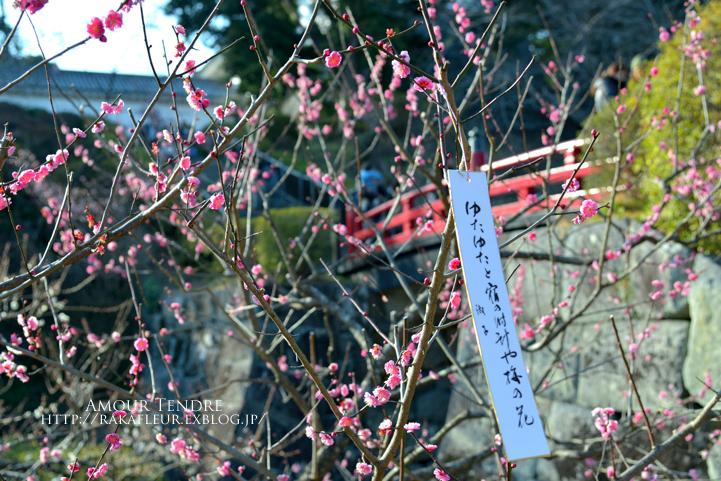 小田原城の梅、いざ!_c0250634_1671974.jpg