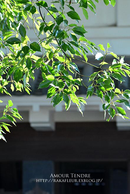 小田原城の梅、いざ!_c0250634_1674362.jpg