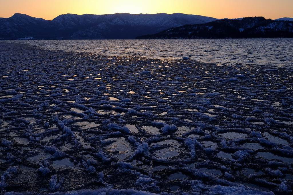 凍湖白鳥図 by New FUJINON16~55mm  _f0050534_07324111.jpg