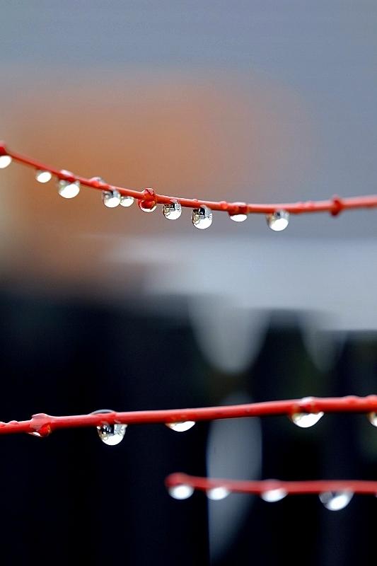 雨水_b0314043_08582540.jpg