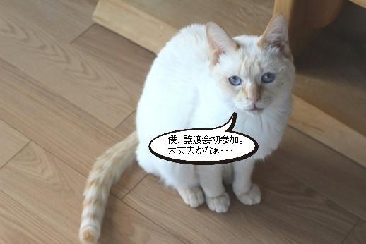 譲渡会参加保護猫さん_e0151545_21135102.jpg